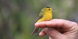 ptaszek na dłoni